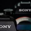 48 Sony A7R II Sony G 90mm Macro 2 8 #SonyAlpha RobertEvans com  DSC06518