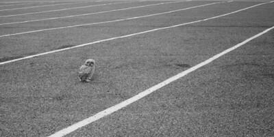 BW Owl250
