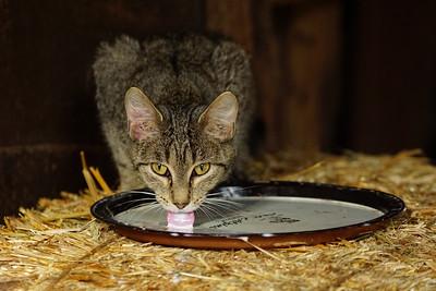 RobertEvans com  |  Iowa Cat