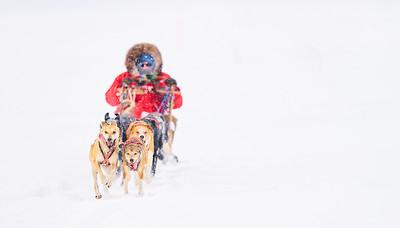 RobertEvans com  |  Minnesota Dog Sled
