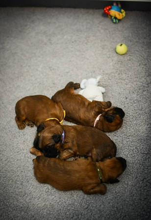 Sophie's Litter - Two Weeks Old