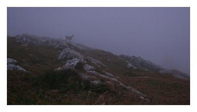 Un chamois dans la brume qui recouvre le sommet par moment.