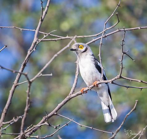 Birding International