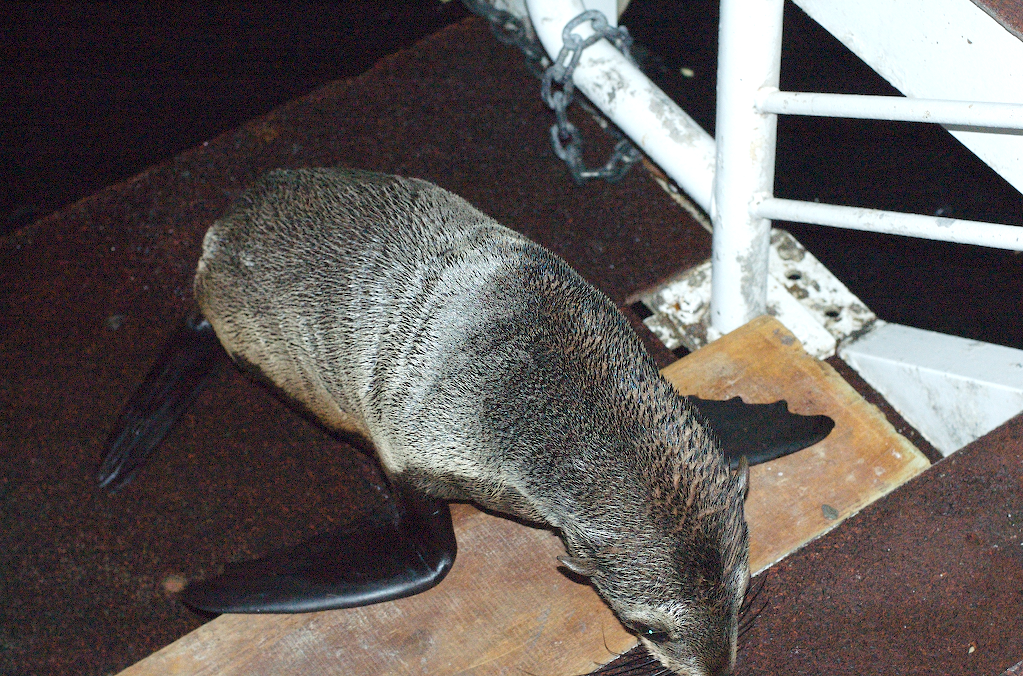 a seal greeting us as we left the ferry