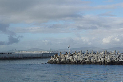 Jackass penguins (seriously) at the docks of Robben Island. Yes, they are tiny.