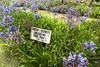 Garden at Longwood House, St. Helena island, South Atlantic Ocean.