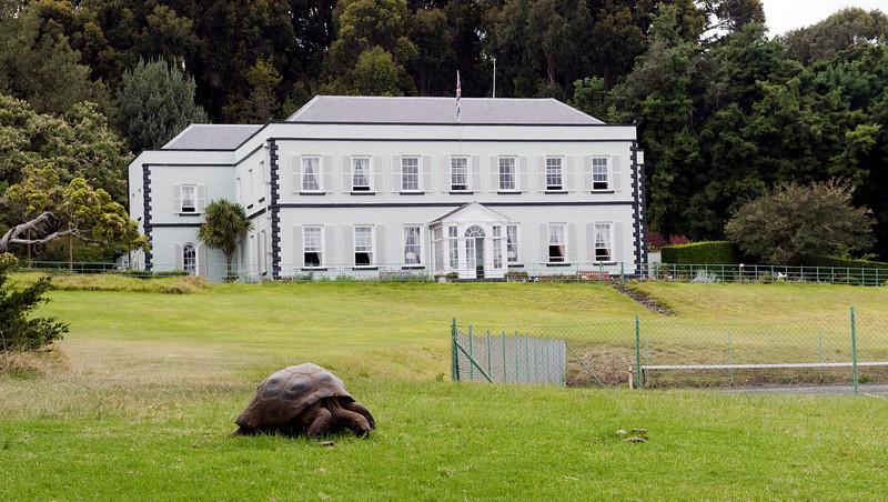 Plantation House and Jonathan, St. Helena island, South Atlantic Ocean.