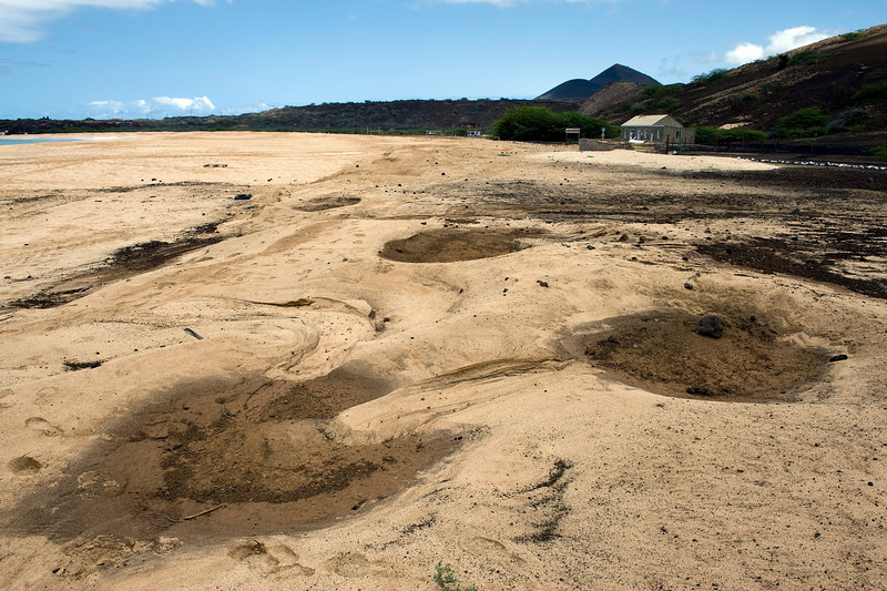 The indentations are where turtles have burrowed to lay eggs on Long Beach, Ascension Island.