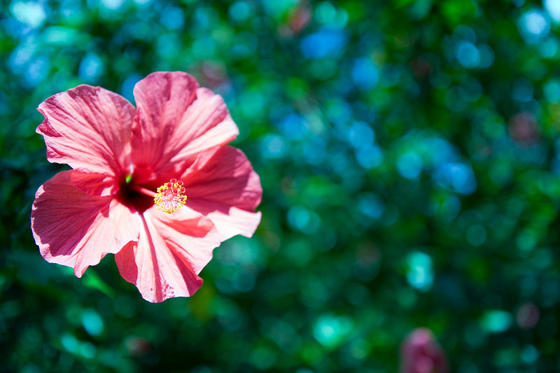 Flower, Green Mountain, Ascension Island.