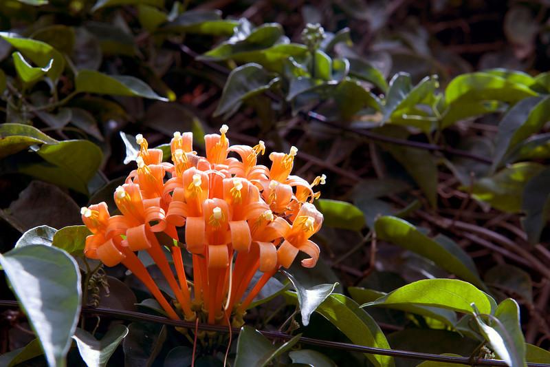 Flower, Ascension Island.