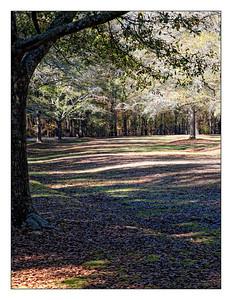 South Carolina 2009
