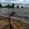 Driftwood on Lake Marion