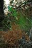 dried maidenhair fern, buckeye sapling