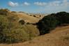 Buckeye grove looking north