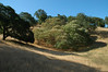 Buckeye grove looking south