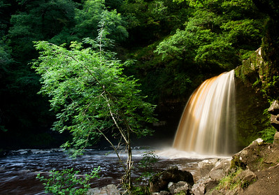 Sgwd Gwladys - I liked the way the tree curved one way and the waterfall the other