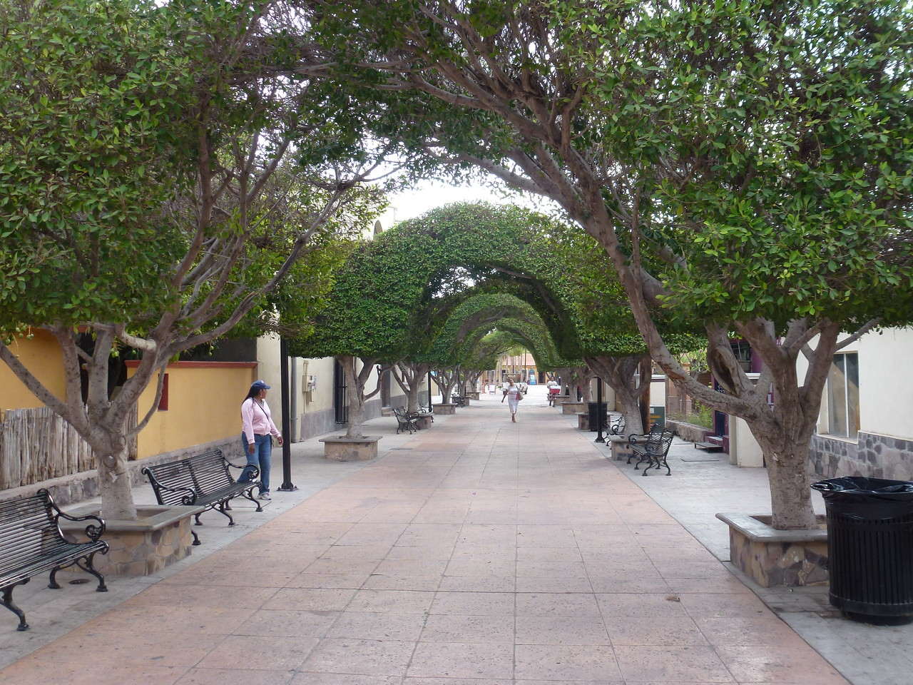 Plaza surrounding the mission <br /> <br /> Wonder how many years they have trimming these trees , like this.......