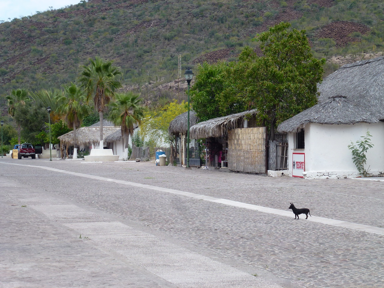 Cobblestone main street - San Javier <br /> <br /> Always a tough doggie around