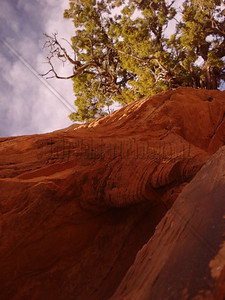 A tree growing through red rock