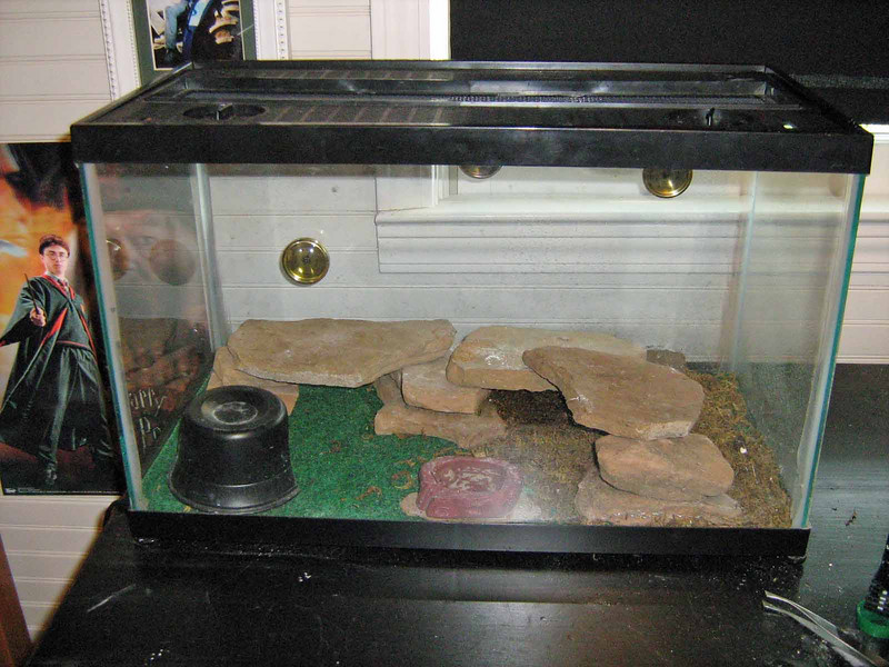 Spakey's cage one side arid with a heater under the tank on the left bellies need to be kept warm.  Other side moist which aids in sheading (they eat shead).  We spray the tank when it is dry.  Moist area has reptile moss on the reptile carpet.  Sand is not recommened for African Fat -Tails.  No lights are needed unless your room temp is below 68.  Two thermometers are in tank for the arid/moist sides and a hydrometer.
