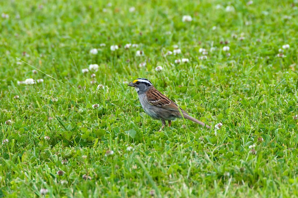 Sparrow 003