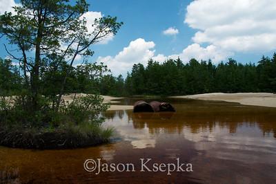 Bog habitat destruction; Ocean County, New Jersey 2011-07-09  #10