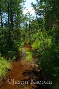 Bog habitat destruction; Ocean County, New Jersey  2011-07-09  #1