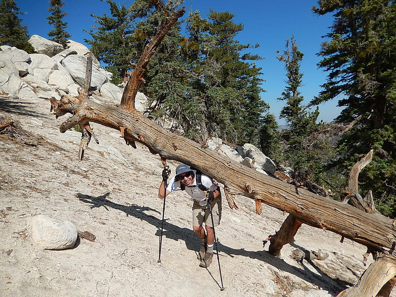 Now we know Spencer is tough, but he didn't have to carry this tree up the mountain to prove it.