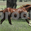 for sale $7000 as a colt