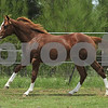 for sale $7,000 as a colt and $5,000 as a gelding