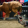 "BANGOR, Maine -- 03/11/2017 -- Justin Granger is bucked from Two Stuff during the Professional Bull Riders Velocity Tour ""Bangor Buck Off,"" at Cross Insurance Center in Bangor Saturday. Ashley L. Conti 