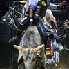 "BANGOR, Maine -- 03/11/2017 -- Keyshawn Whitehorse rides Uptown Funk during the Professional Bull Riders Velocity Tour ""Bangor Buck Off,"" at Cross Insurance Center in Bangor Saturday. Ashley L. Conti 