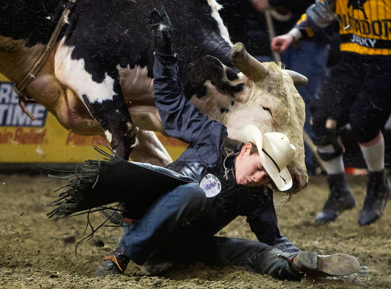 """BANGOR, Maine -- 03/11/2017 -- Clayton Gifford is bucked off Table Dancer during the Professional Bull Riders Velocity Tour """"Bangor Buck Off,"""" at Cross Insurance Center in Bangor Saturday. Ashley L. Conti   BDN"""