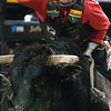 """BANGOR, Maine -- 03/11/2017 -- Dylan Madsen tries to hang on to Heat Seeker during the Professional Bull Riders Velocity Tour """"Bangor Buck Off,"""" at Cross Insurance Center in Bangor Saturday. Ashley L. Conti 
