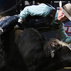 "BANGOR, Maine -- 03/11/2017 -- Nathan Burtenshaw tries to stay on Sarge during the Professional Bull Riders Velocity Tour ""Bangor Buck Off,"" at Cross Insurance Center in Bangor Saturday. Ashley L. Conti 