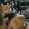 "BANGOR, Maine -- 03/11/2017 -- Tyler Harr tries to stay on One Eyed Ghost during the Professional Bull Riders Velocity Tour ""Bangor Buck Off,"" at Cross Insurance Center in Bangor Saturday. Ashley L. Conti 