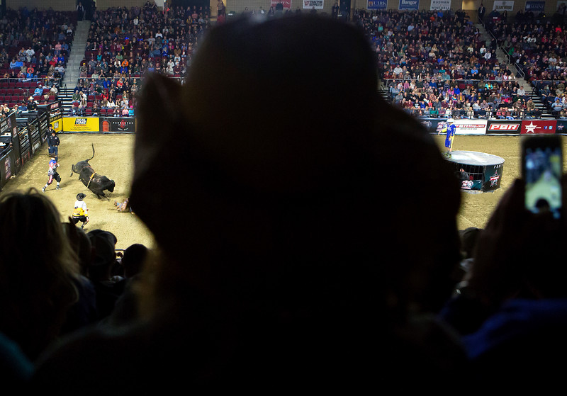 """BANGOR, Maine -- 03/11/2017 -- Fans watch as a rider is bucked off a bull during the Professional Bull Riders Velocity Tour """"Bangor Buck Off,"""" at Cross Insurance Center in Bangor Saturday. Ashley L. Conti 