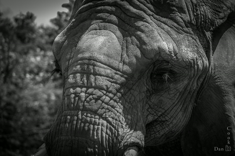 Elephant at the Toronto Zoo