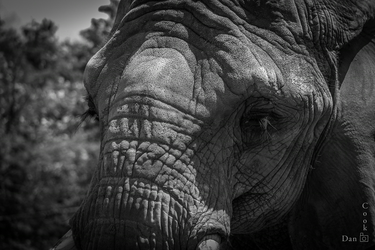 Elephant at the Toronto Zoo