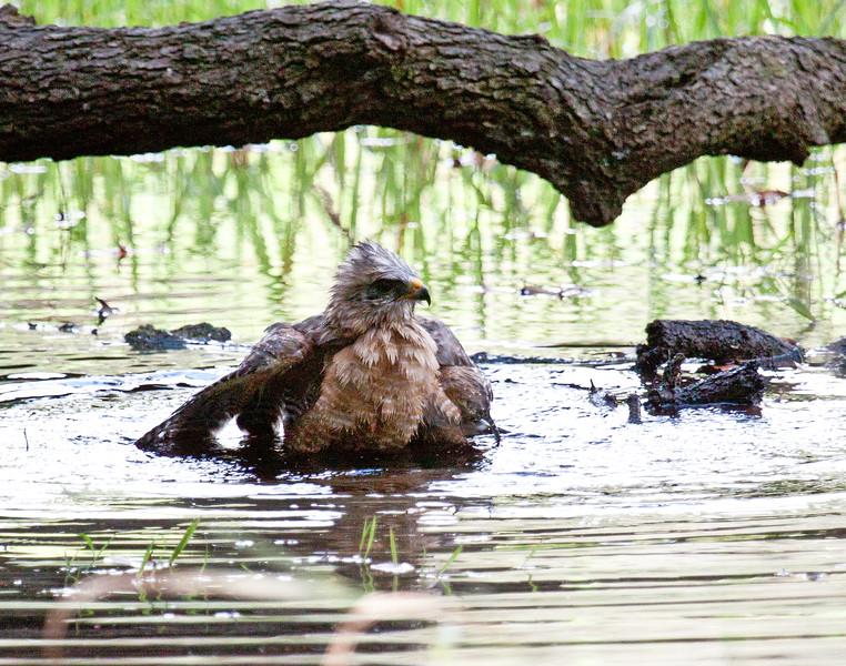 RS Hawk bathing