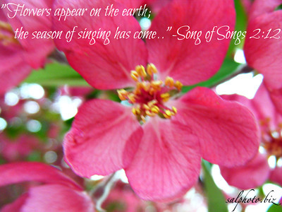 The flowers appear on the earth; the time of the singing of birds is come, and the voice of the turtle is heard in our land;-Song of Songs 2  http://www.blueletterbible.org/Bible.cfm?b=Sgs&c=2