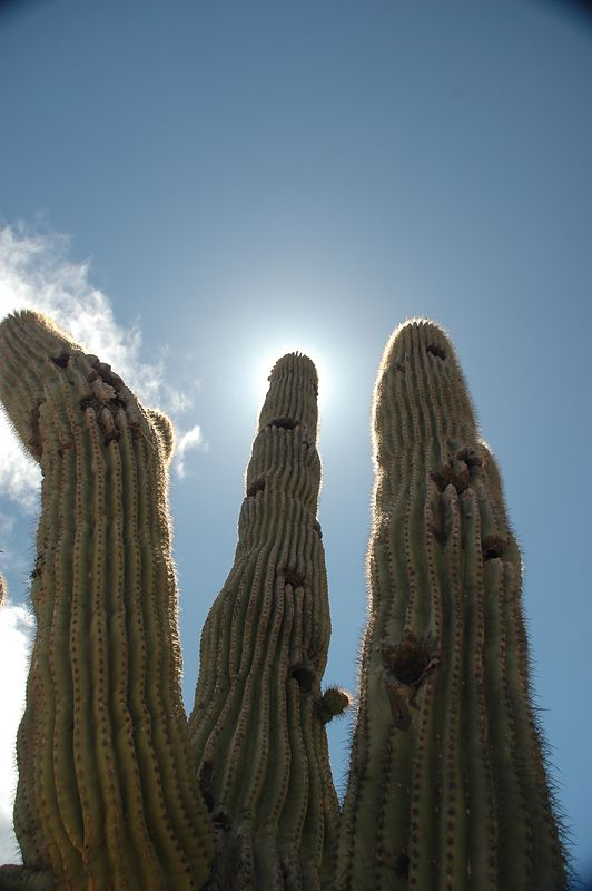 This is the high-rise section-Cactus Condo