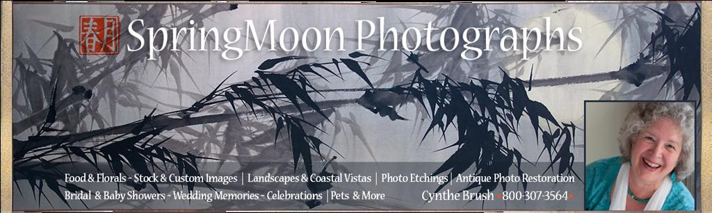 SpringMoon Photographs | Cynthe Brush, Photographer