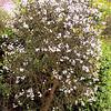 The whole dang citron tree!