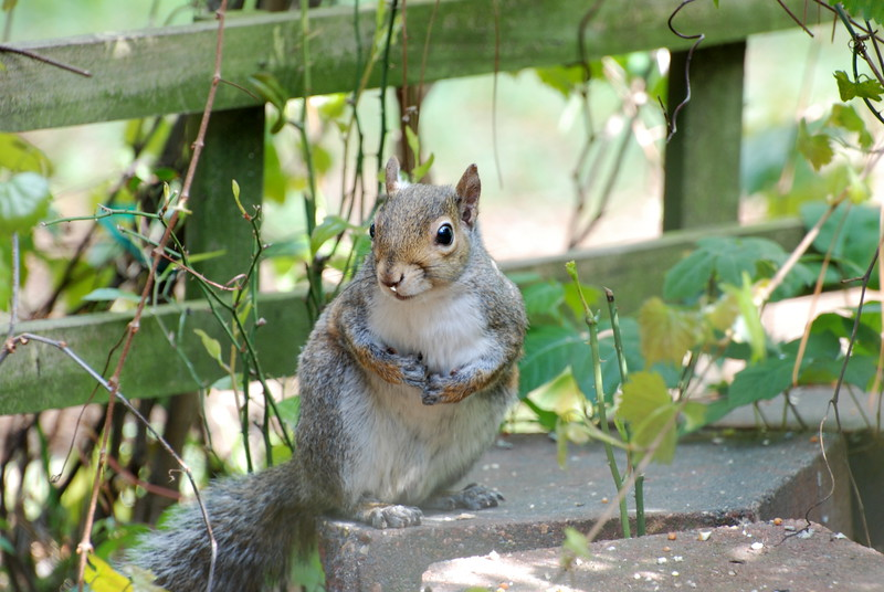 cute squirrel.jpg