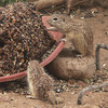 PICT3117_Baby-Squirrels