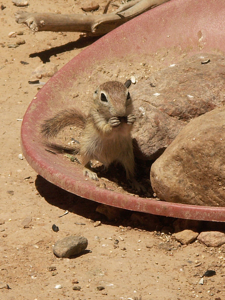 PICT2984_Baby-Squirrel