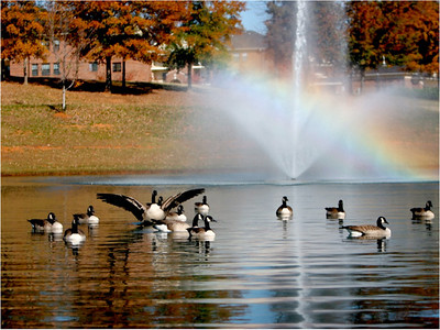 Lake Hollifield: One of the most beautiful areas on campus is the Lake Hollifield complex.  Surrounded by trees that explode with color in the beautiful North Carolina autumn, the complex features a jogging track, several swings, and of course the Lake Hollifield Bell Tower, the site of incoming freshmen's first campus worship service each year.   The Lake Hollifield complex is also the future site of Gardner-Webb's new Tucker Student Center, an awesome complex incoming students can anticipate.