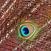 "Peacock feather ""eye."""
