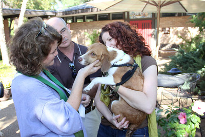 IMG_1652jcarrington blessing of pets st p  10211